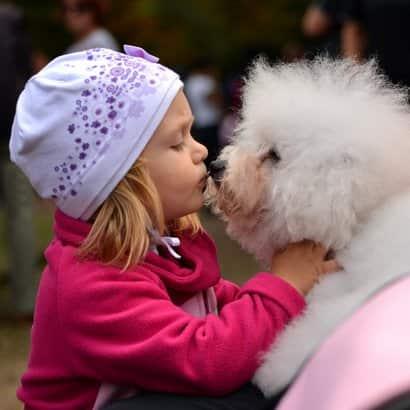 cão branco com uma menina