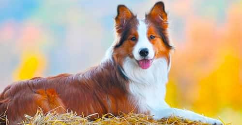 cachorro-macho-grande