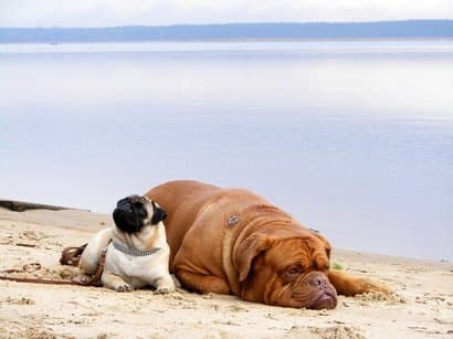 dois cachorros deitado na praiaa