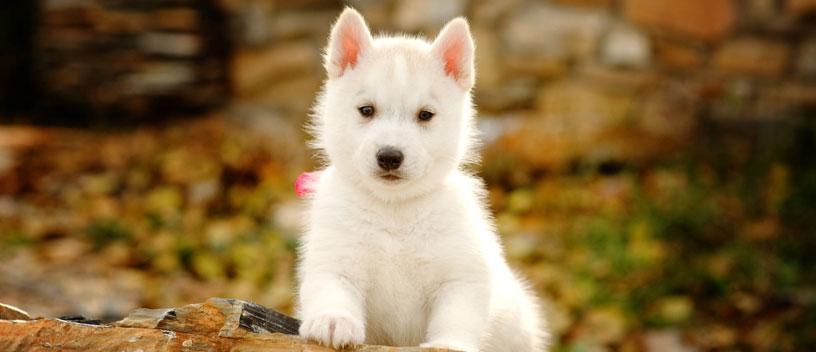 nomes cachorros bonitos