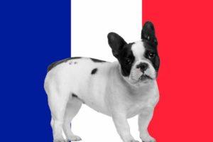 Nomes franceses para cachorros