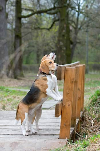 nomes para beagle