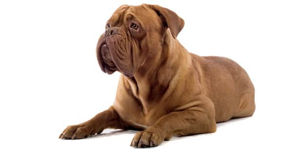 nomes fortes para cachorros