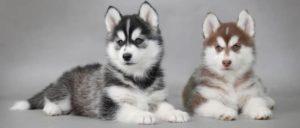 nomes-nordicos-cachorros