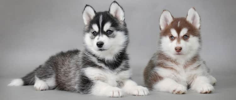 nomes nordicos cachorros