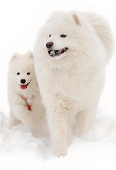 nomes  vikings cachorro branco