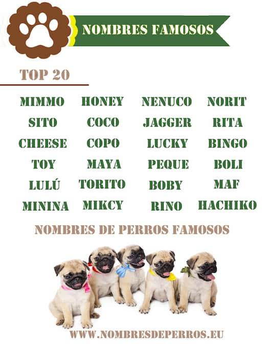 Nomes Para Cachorros De Famosos Nomes Para Cachorros