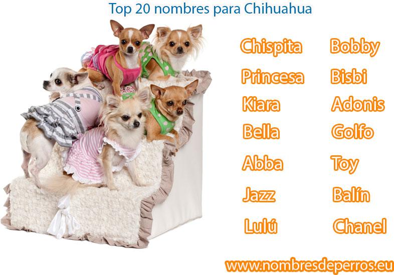 melhores nomes para cachorros chihuahua