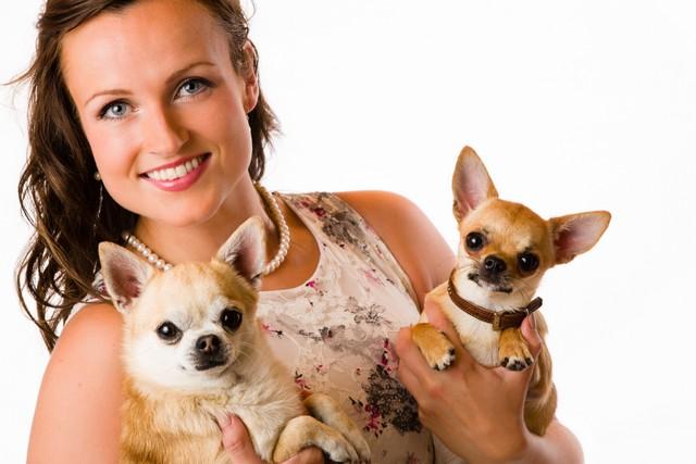 mulher com sua raça chihuahua de dois cães