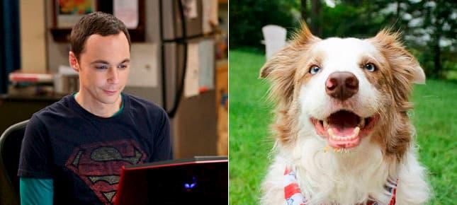 nomes de nerd para cães
