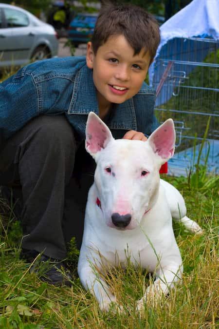 menino com seu cachorro bull terrier branco