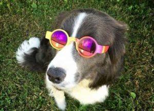 nomes hippies para cães