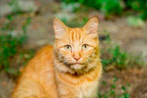 nomes para gatos amarelos